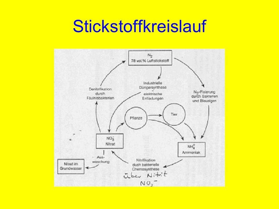 Stickstoffkreislauf