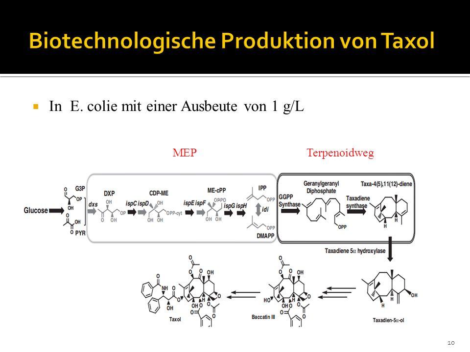 Biotechnologische Produktion von Taxol