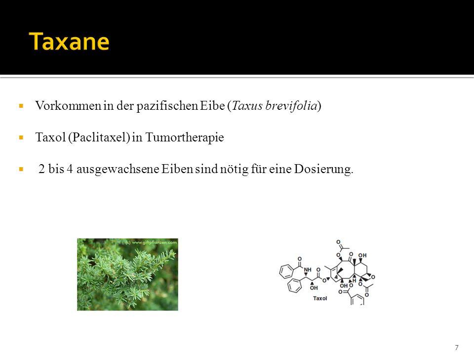Taxane Vorkommen in der pazifischen Eibe (Taxus brevifolia)