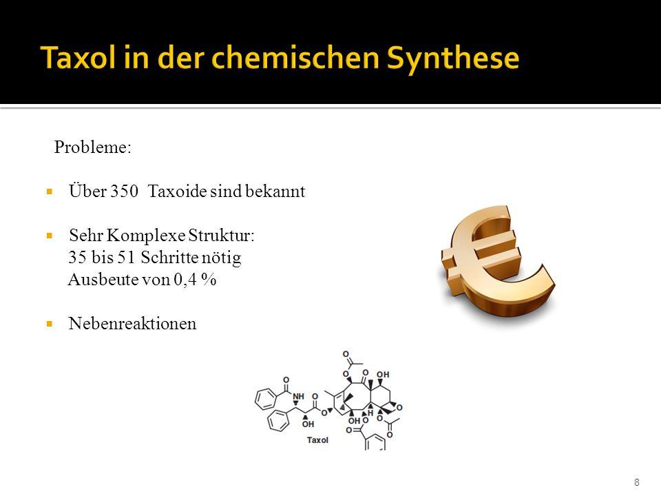 Taxol in der chemischen Synthese