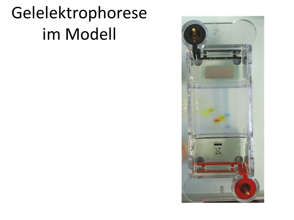 Gelelektrophorese im Modell