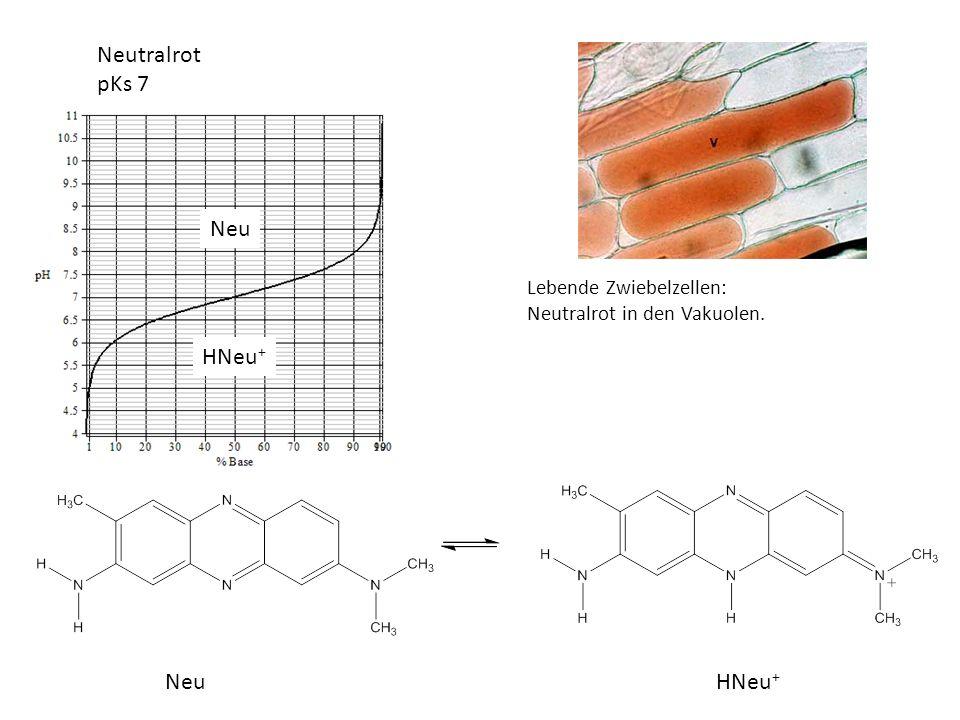 Neutralrot pKs 7 Neu HNeu+ Neu HNeu+ Lebende Zwiebelzellen: