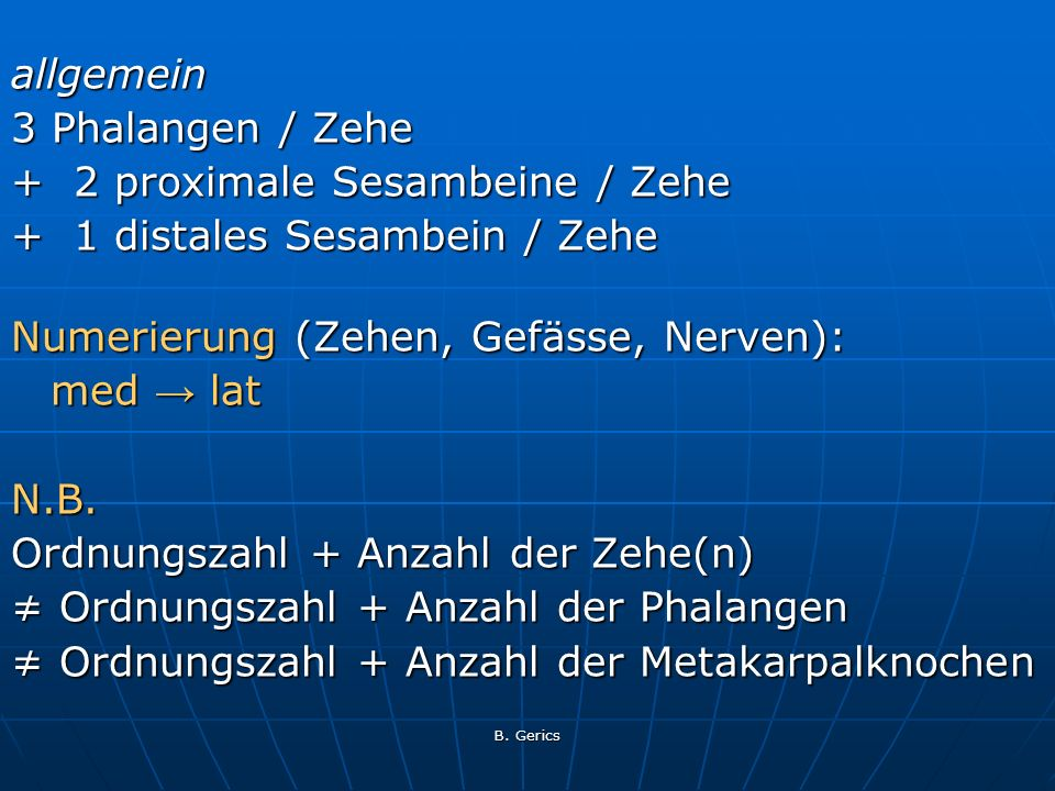 + 2 proximale Sesambeine / Zehe + 1 distales Sesambein / Zehe
