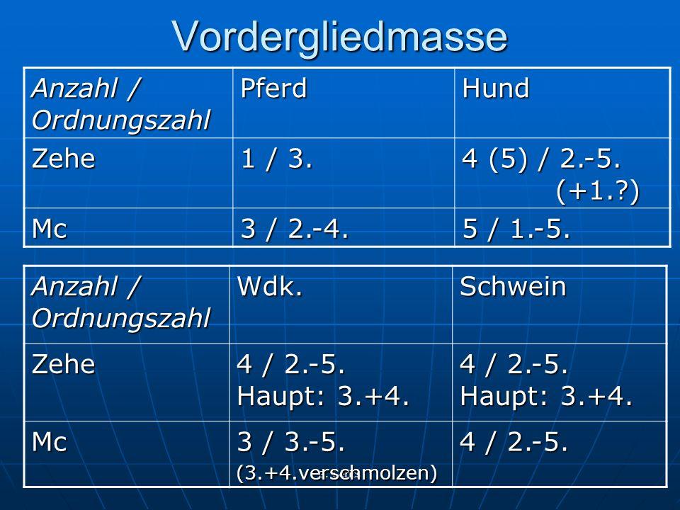 Vordergliedmasse Anzahl / Ordnungszahl Pferd Hund Zehe 1 / 3.