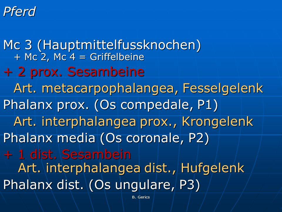 Mc 3 (Hauptmittelfussknochen) + Mc 2, Mc 4 = Griffelbeine