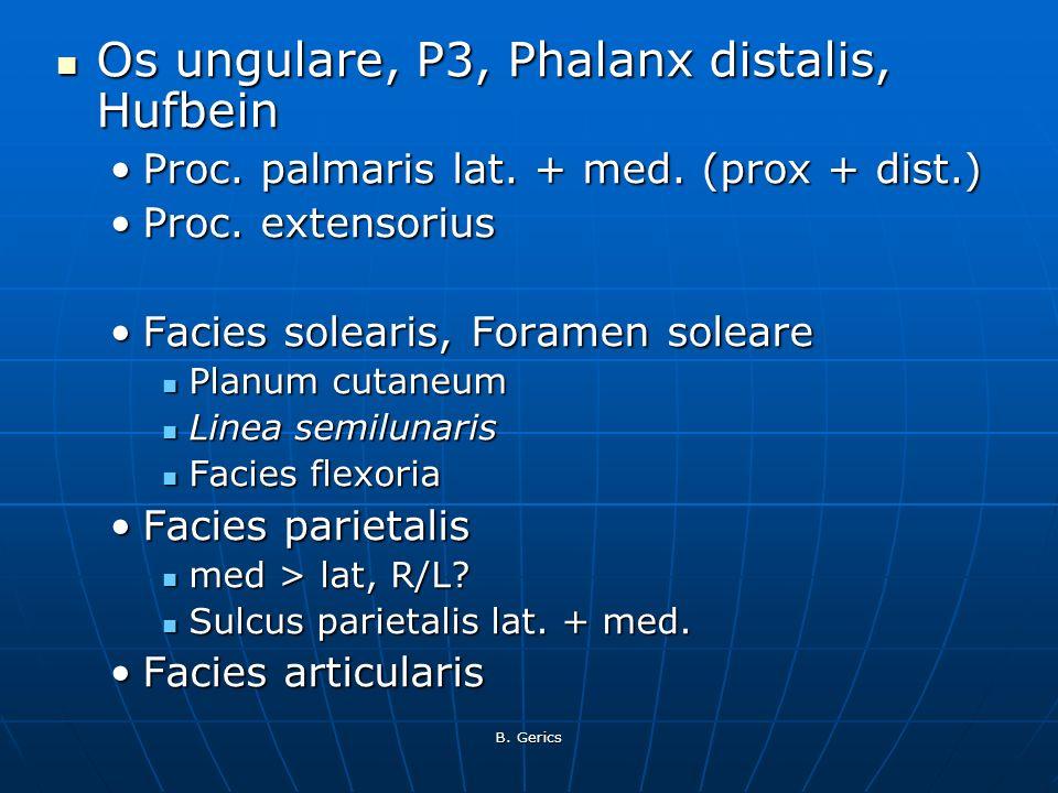 Os ungulare, P3, Phalanx distalis, Hufbein