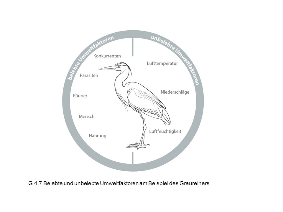 G 4.7 Belebte und unbelebte Umweltfaktoren am Beispiel des Graureihers.