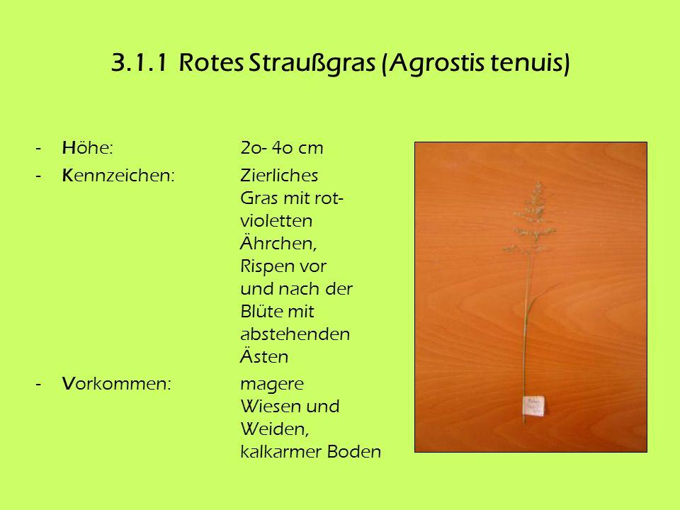 3.1.1 Rotes Straußgras (Agrostis tenuis)
