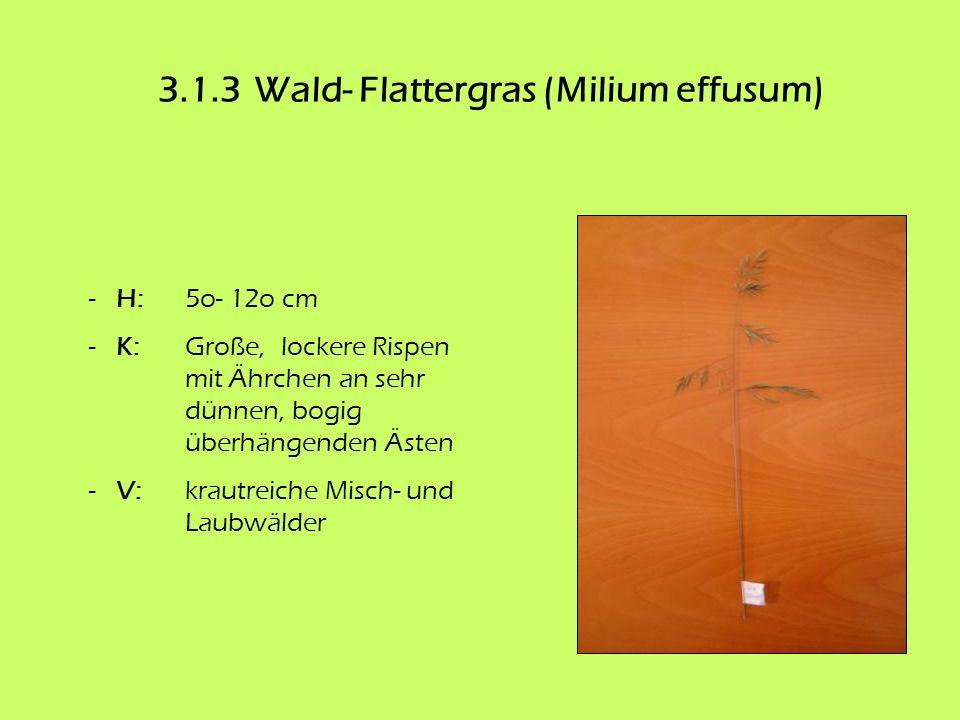 3.1.3 Wald- Flattergras (Milium effusum)