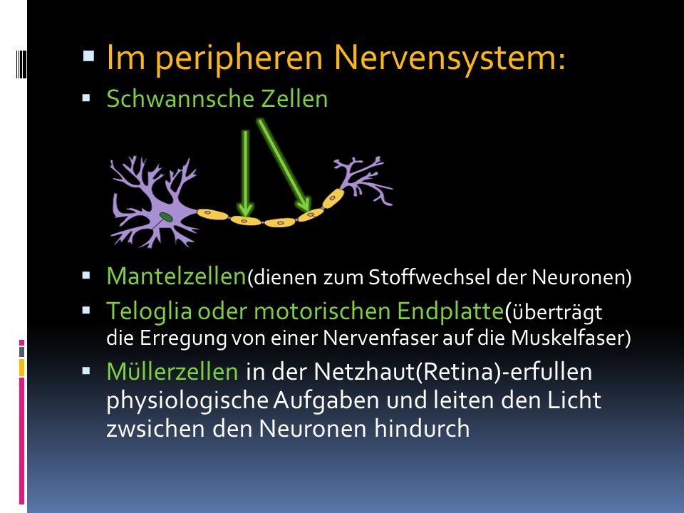 Im peripheren Nervensystem: