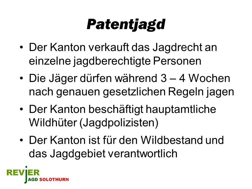 Patentjagd Der Kanton verkauft das Jagdrecht an einzelne jagdberechtigte Personen.