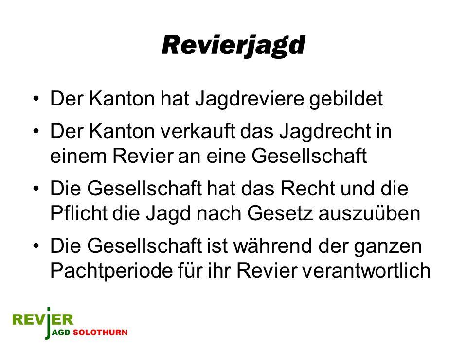 Revierjagd Der Kanton hat Jagdreviere gebildet