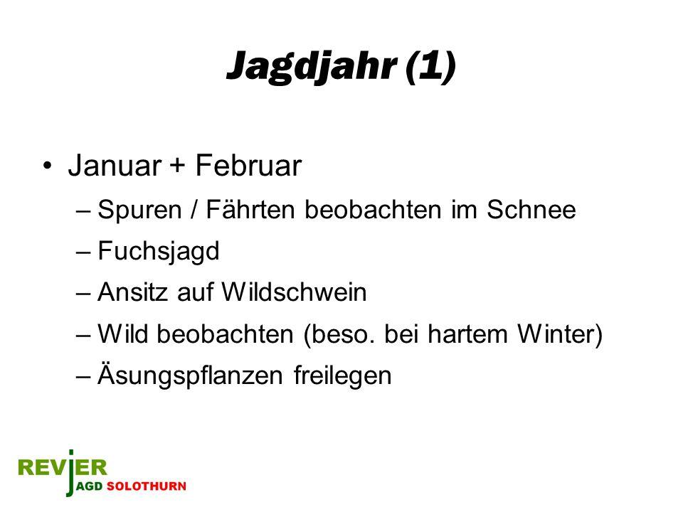 Jagdjahr (1) Januar + Februar Spuren / Fährten beobachten im Schnee
