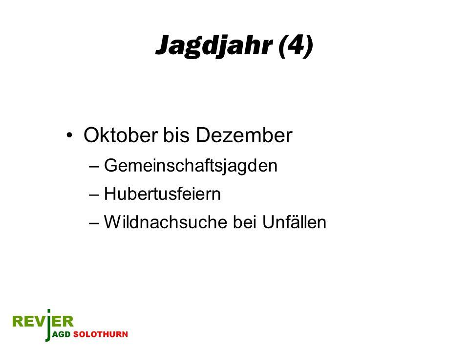 Jagdjahr (4) Oktober bis Dezember Gemeinschaftsjagden Hubertusfeiern