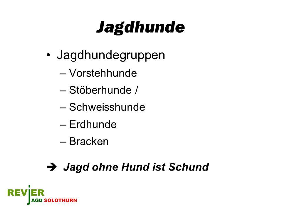 Jagdhunde Jagdhundegruppen Vorstehhunde Stöberhunde / Schweisshunde