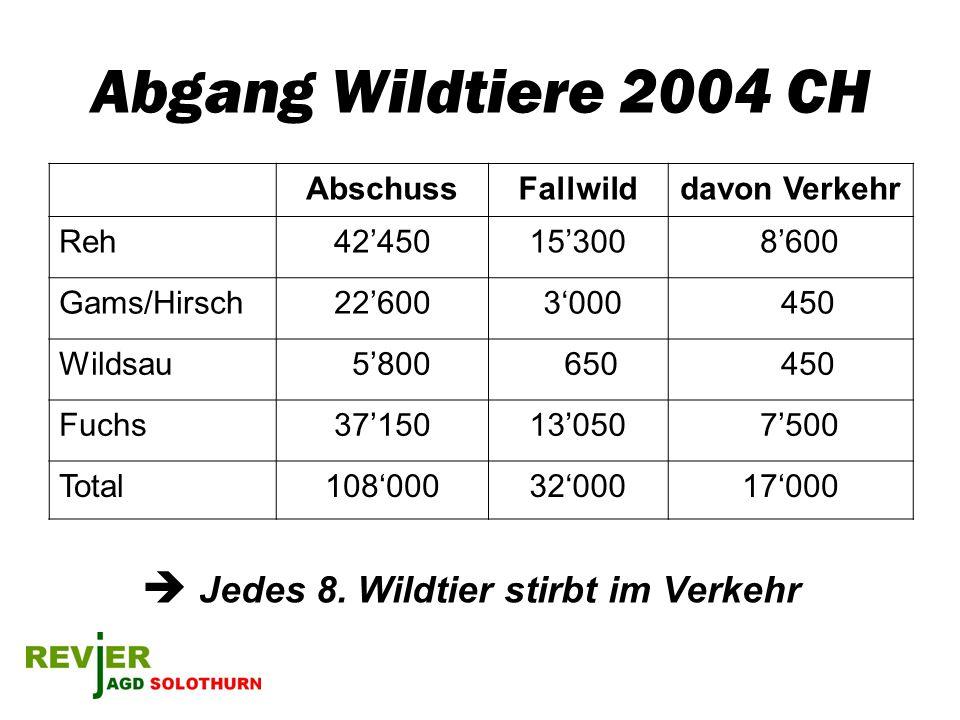 Abgang Wildtiere 2004 CH  Jedes 8. Wildtier stirbt im Verkehr