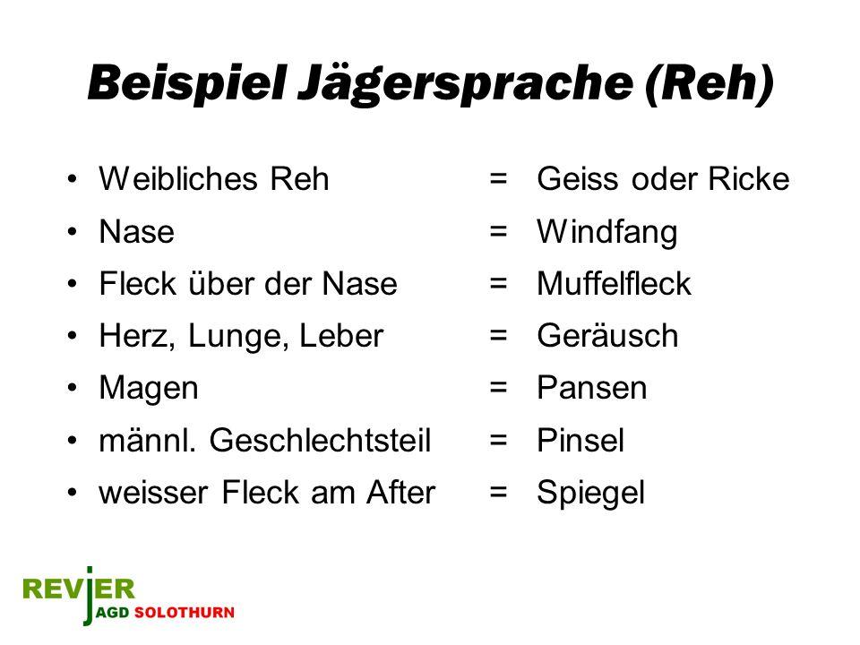 Beispiel Jägersprache (Reh)