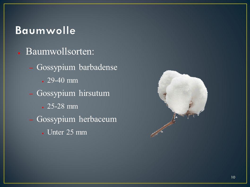 Baumwolle Baumwollsorten: Gossypium barbadense Gossypium hirsutum
