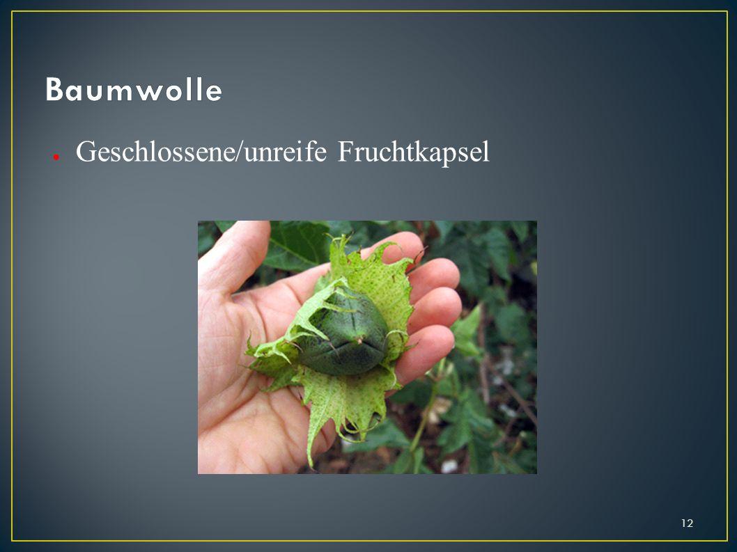 Baumwolle Geschlossene/unreife Fruchtkapsel