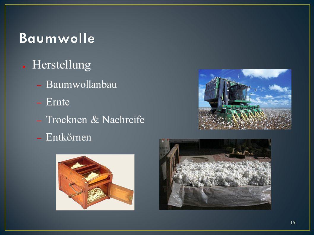 Baumwolle Herstellung Baumwollanbau Ernte Trocknen & Nachreife