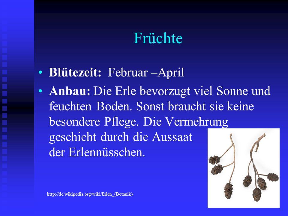 Früchte Blütezeit: Februar –April
