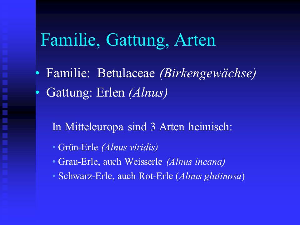 Familie, Gattung, Arten Familie: Betulaceae (Birkengewächse)