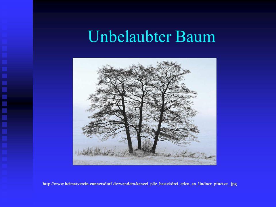 Unbelaubter Baum http://www.heimatverein-cunnersdorf.de/wandern/kanzel_pilz_bastei/drei_erlen_an_lindner_pfuetze_.jpg.