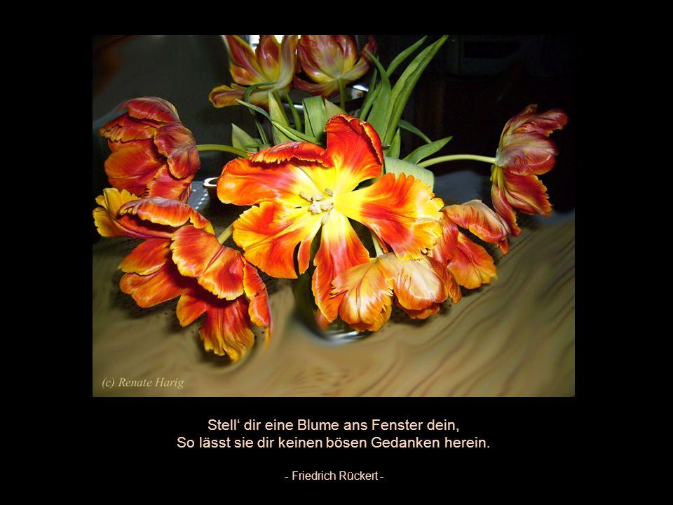 Stell' dir eine Blume ans Fenster dein,