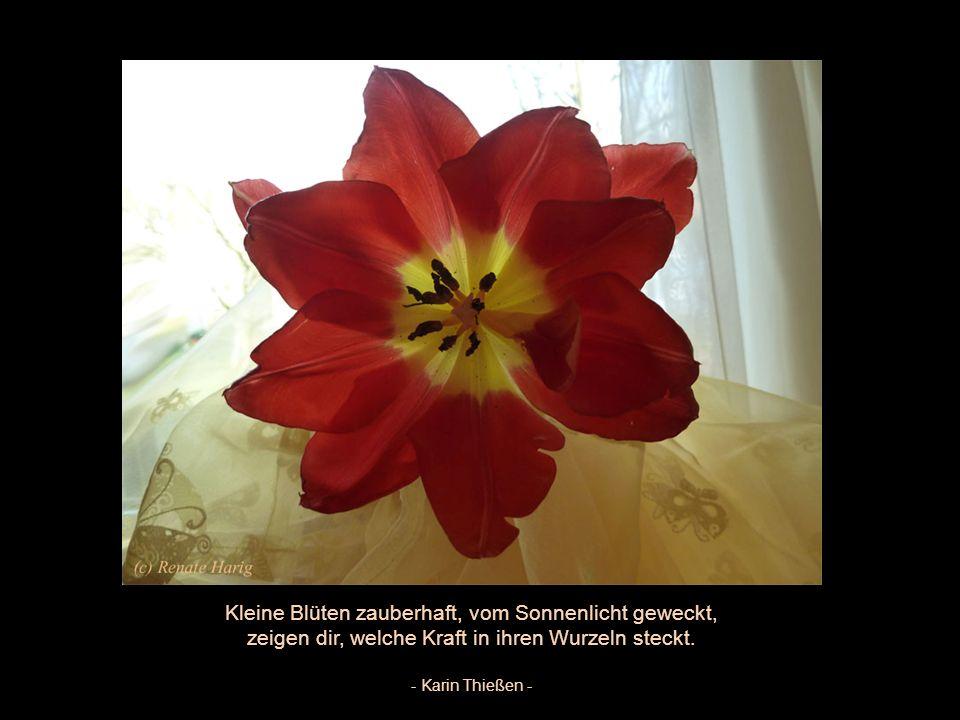 Kleine Blüten zauberhaft, vom Sonnenlicht geweckt,