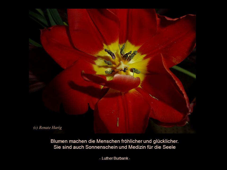 Blumen machen die Menschen fröhlicher und glücklicher.