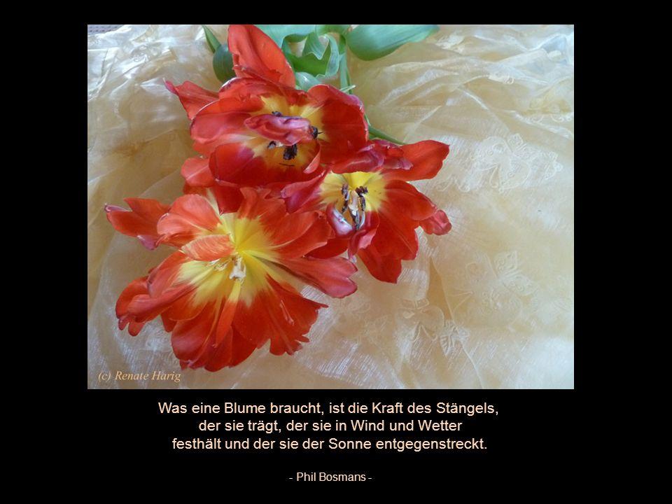 Was eine Blume braucht, ist die Kraft des Stängels,