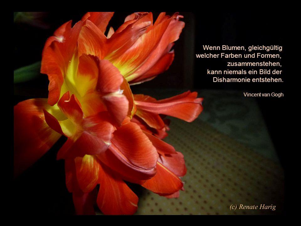 Wenn Blumen, gleichgültig welcher Farben und Formen, zusammenstehen,