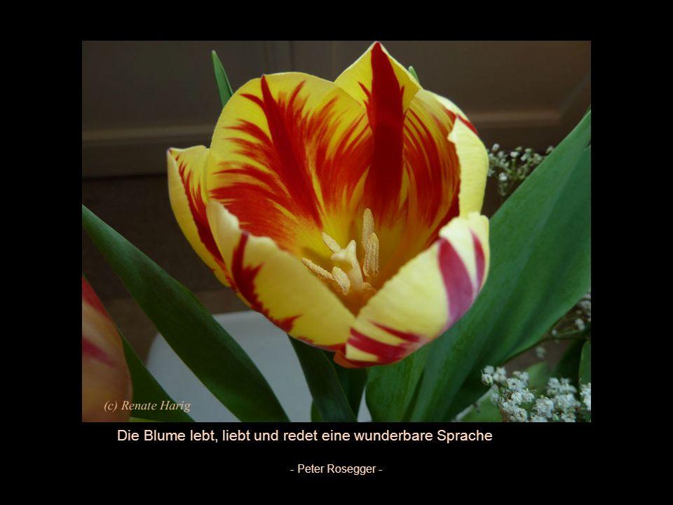 Die Blume lebt, liebt und redet eine wunderbare Sprache