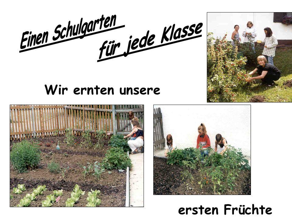 Einen Schulgarten für jede Klasse