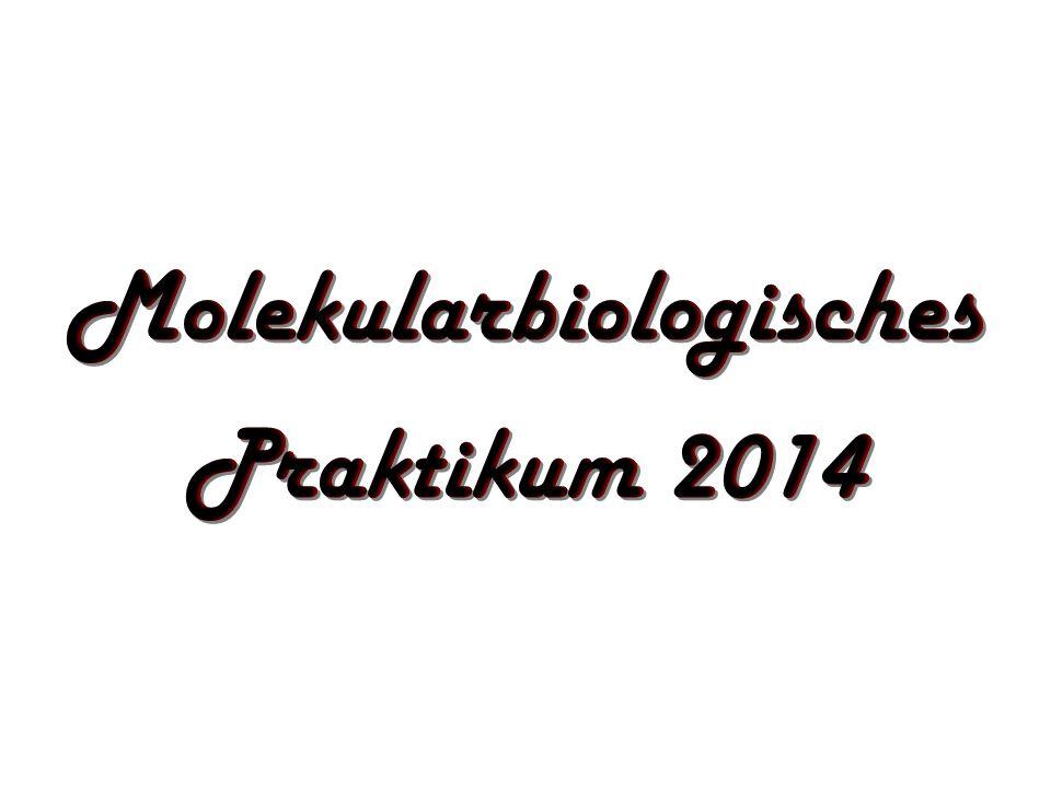 Molekularbiologisches