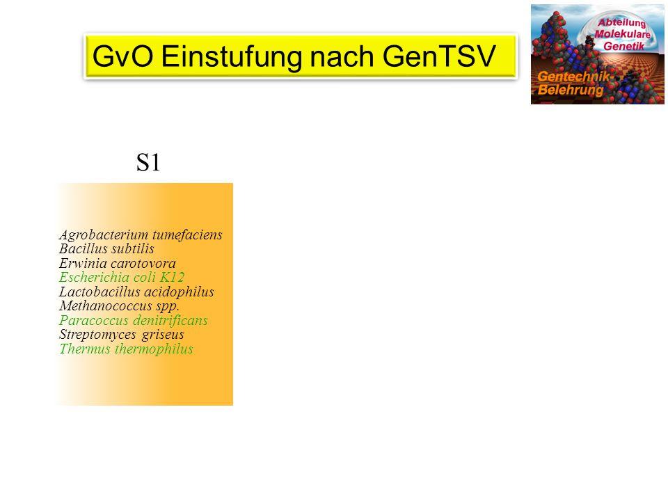 GvO Einstufung nach GenTSV