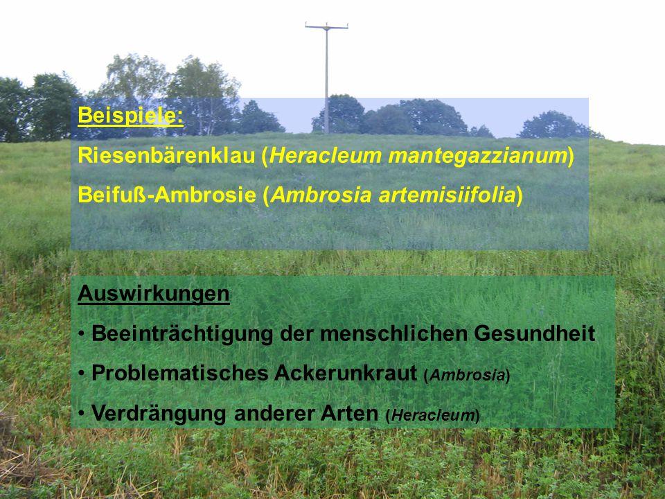 Beispiele: Riesenbärenklau (Heracleum mantegazzianum) Beifuß-Ambrosie (Ambrosia artemisiifolia) Auswirkungen.