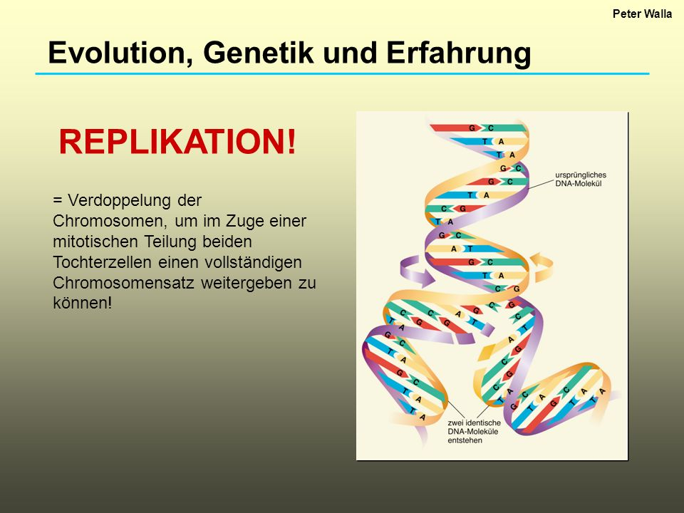 REPLIKATION! Evolution, Genetik und Erfahrung