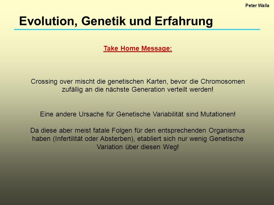 Eine andere Ursache für Genetische Variabilität sind Mutationen!