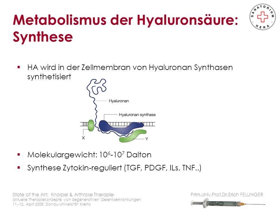 Metabolismus der Hyaluronsäure: Synthese