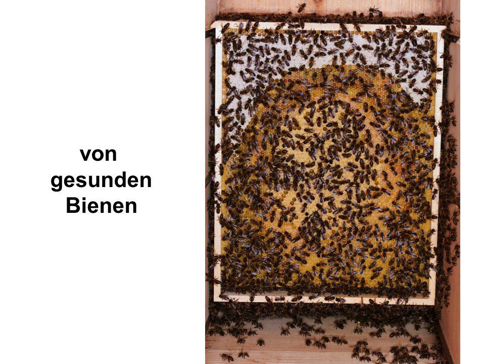 von gesunden Bienen Das von gesunden Bienen stammt.