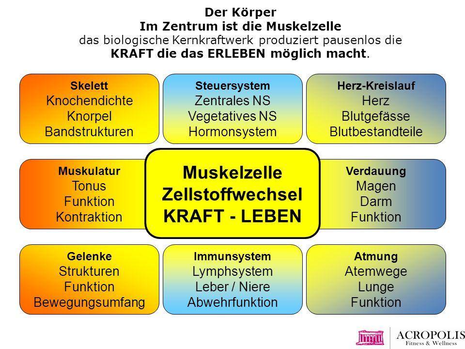 Muskelzelle Zellstoffwechsel KRAFT - LEBEN