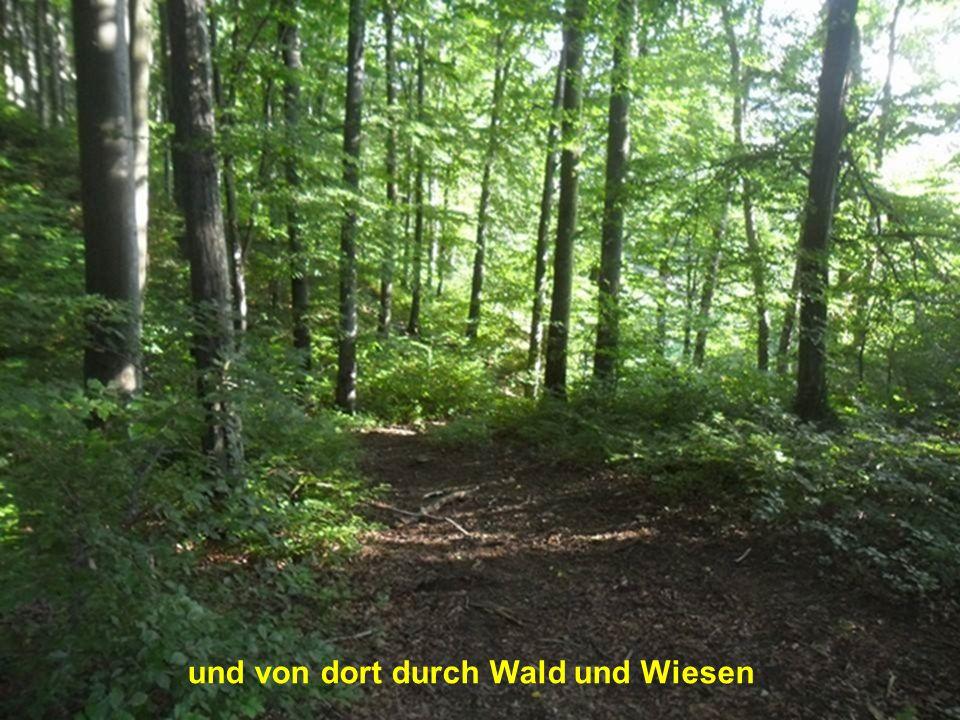 und von dort durch Wald und Wiesen
