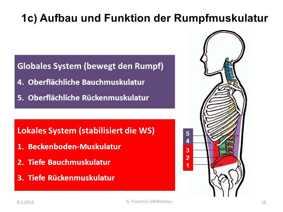 Fein Rumpfmuskulatur Diagramm Zeitgenössisch - Menschliche Anatomie ...