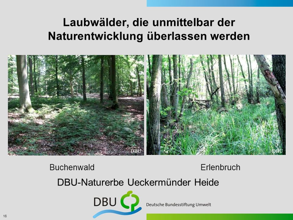 Laubwälder, die unmittelbar der Naturentwicklung überlassen werden
