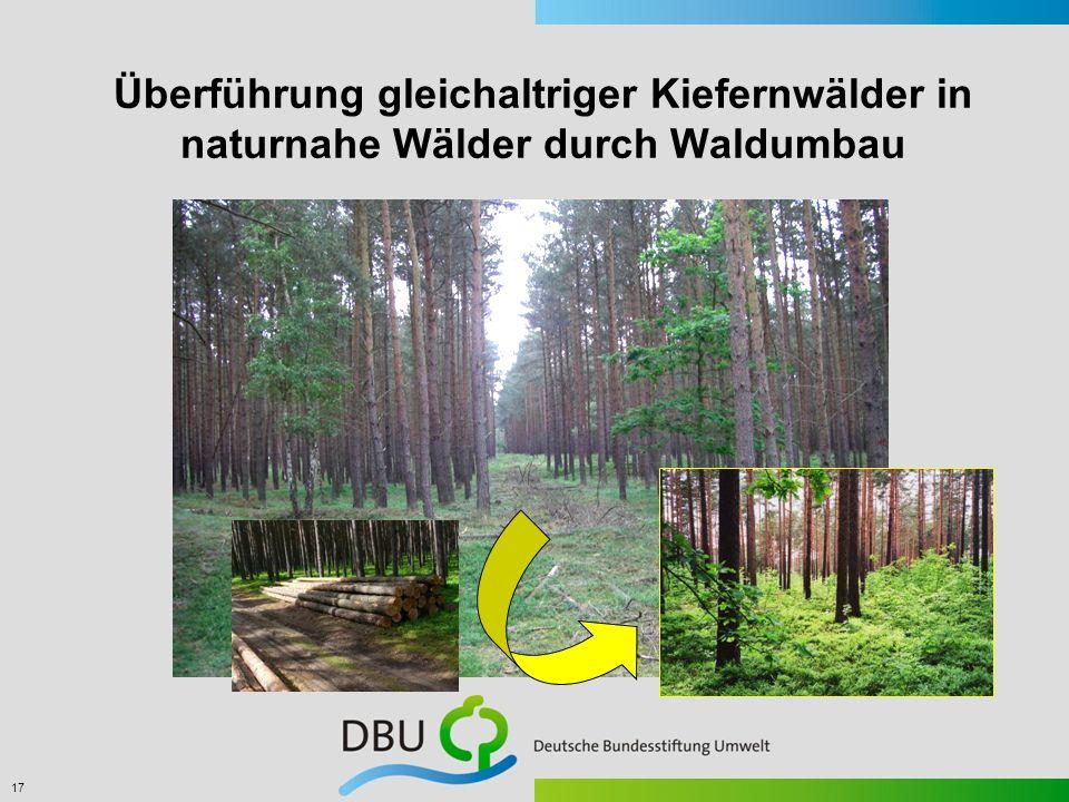 Überführung gleichaltriger Kiefernwälder in naturnahe Wälder durch Waldumbau