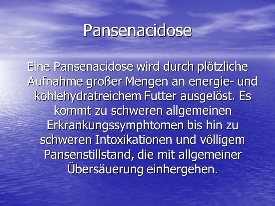 Pansenacidose