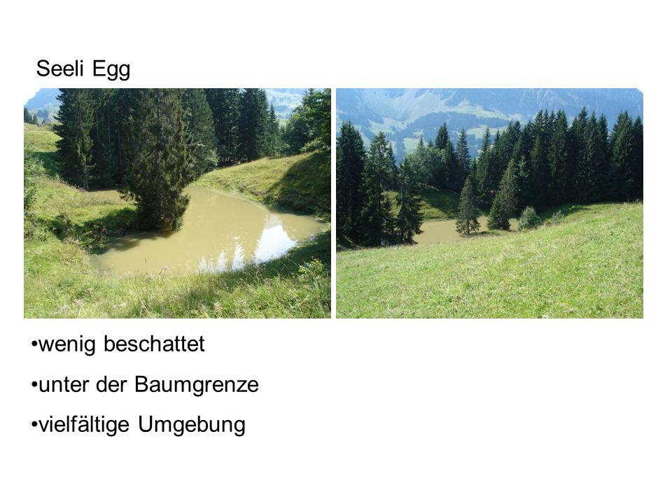 Seeli Egg wenig beschattet unter der Baumgrenze vielfältige Umgebung