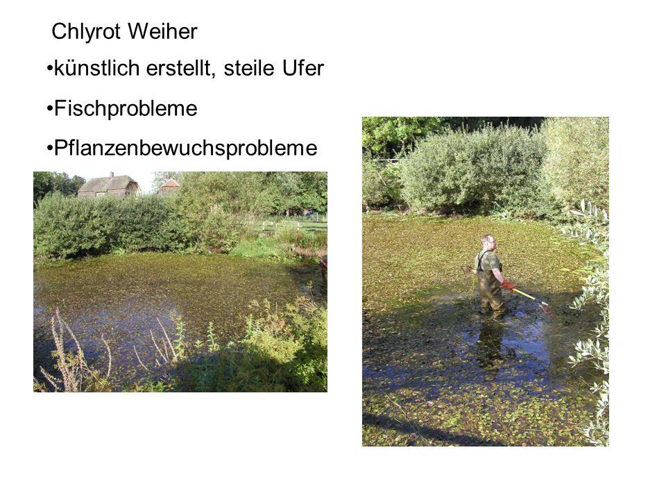 Chlyrot Weiher künstlich erstellt, steile Ufer Fischprobleme Pflanzenbewuchsprobleme
