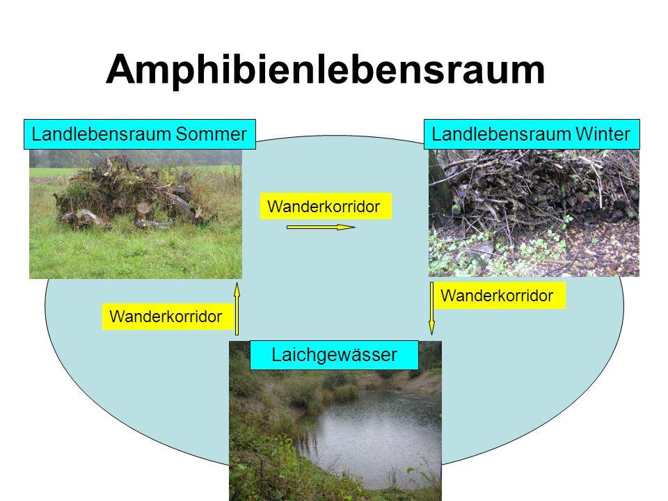 Amphibienlebensraum Landlebensraum Sommer Landlebensraum Winter